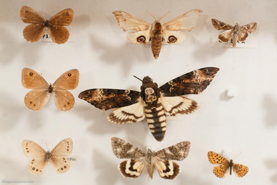 собрание коллекции бабочек