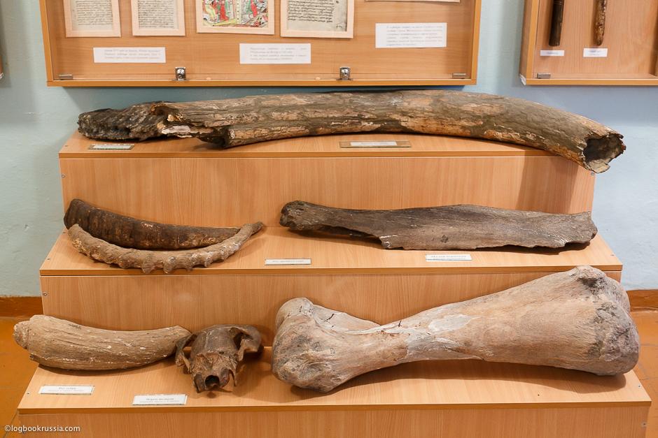 кости доисторических животных